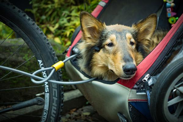 remorque à vélo chien